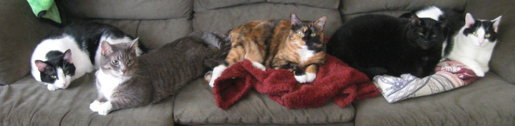 cropped-five-cats.jpg